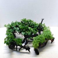 水草付き流木