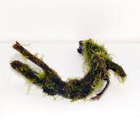 国産枝流木3