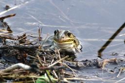 110525 ブログ用写真 カエル
