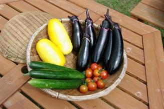 110528 ブログ野菜