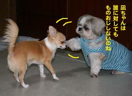 000_20121107004814.jpg