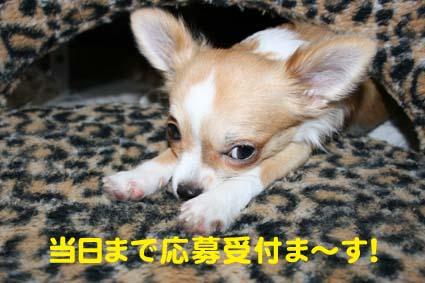01_20121030220153.jpg