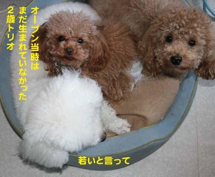 04_20120502194657.jpg