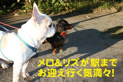 0_20121117190230.jpg