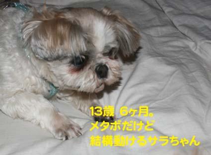 113_20120519150643.jpg