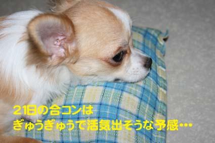 11_20121020111148.jpg