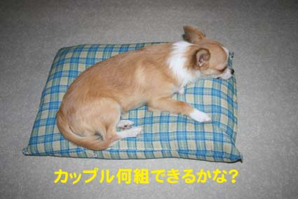 12_20121020111148.jpg