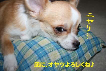 13_20121020111147.jpg