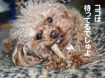 1_20120420111038.jpg
