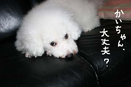 1_20120608094642.jpg