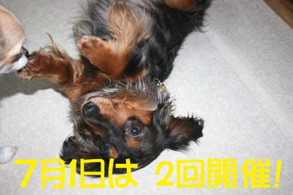 1_20120626154845.jpg