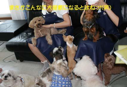 1_20120803143101.jpg