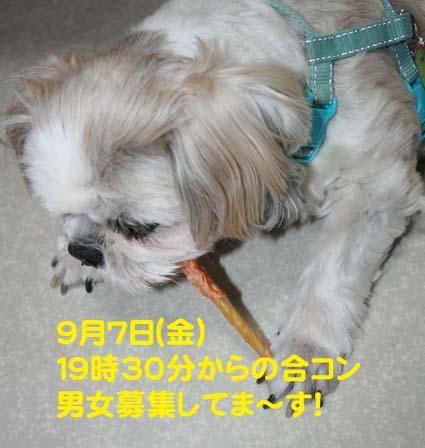 1_20120904111828.jpg