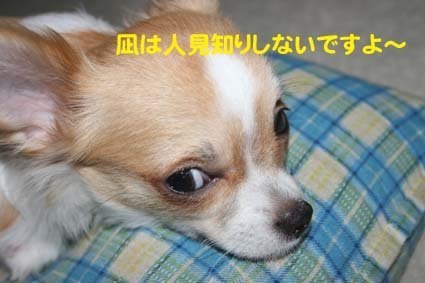1_20120919111924.jpg