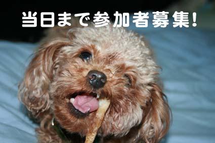 1_20120921193256.jpg