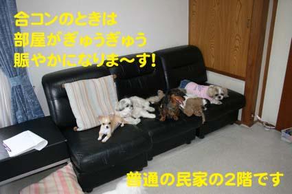 1_20121005101443.jpg