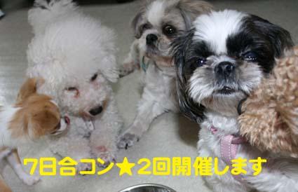 1_20121006180729.jpg
