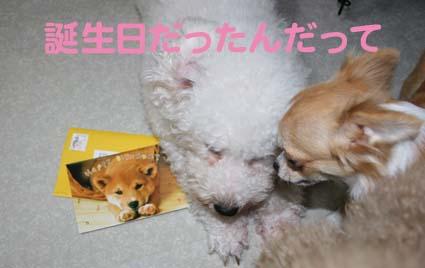 1_20121012175121.jpg