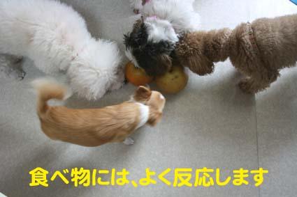 1_20121012180616.jpg