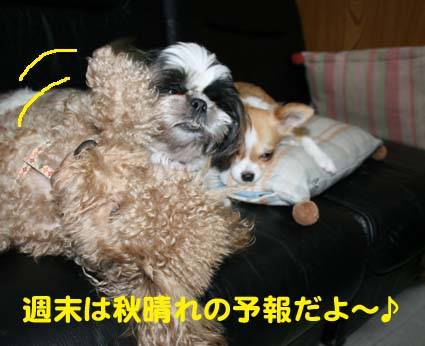 1_20121020091456.jpg