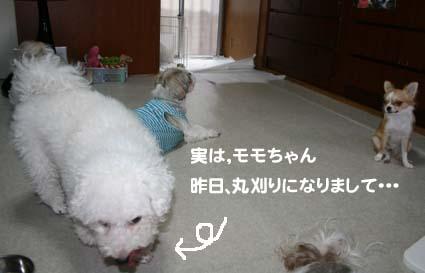 1_20121101163531.jpg