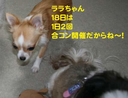 1_20121115121031.jpg
