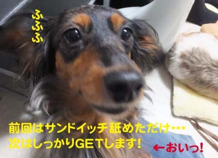 1_20121211115453.jpg