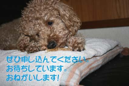 2_20120713183109.jpg