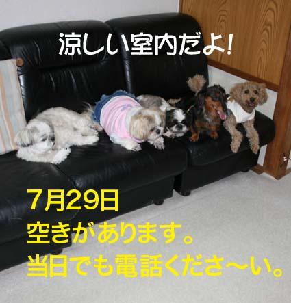 2_20120728110342.jpg