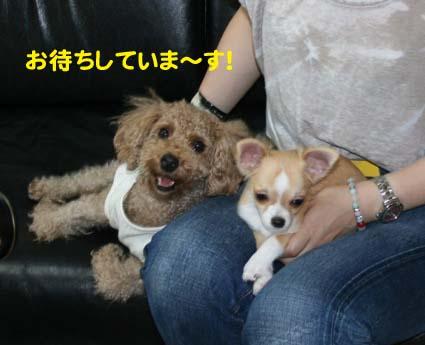 2_20121005101443.jpg