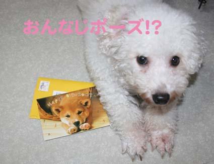 2_20121012175121.jpg