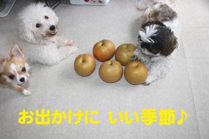 2_20121012180616.jpg