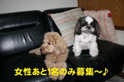 2_20121016175103.jpg