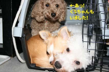 2_20121109132711.jpg