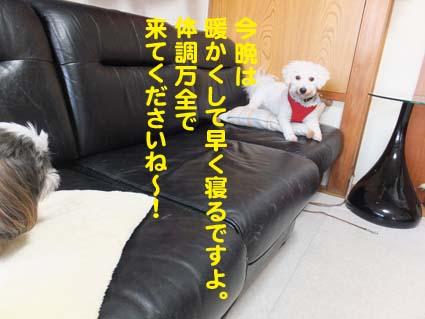2_20121208184551.jpg