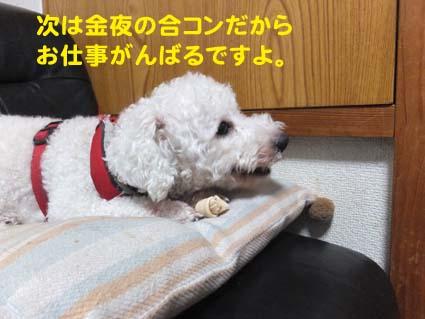 2_20121211115452.jpg
