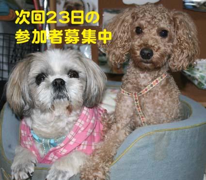 2_20121213134147.jpg
