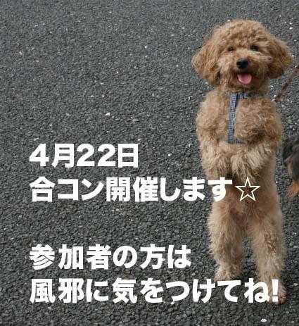 3_20120414163921.jpg