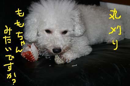 3_20120511141726.jpg