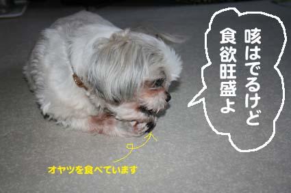 3_20120608094638.jpg