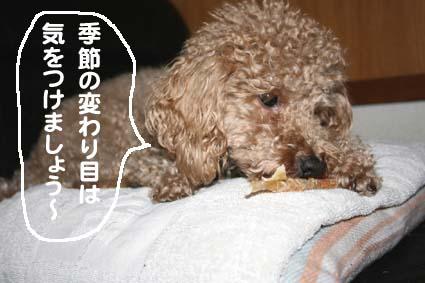 3_20120615203812.jpg