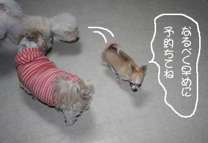 3_20120620113225.jpg