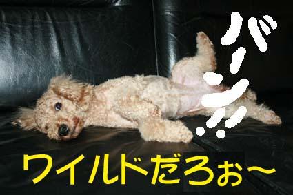 3_20120627122319.jpg