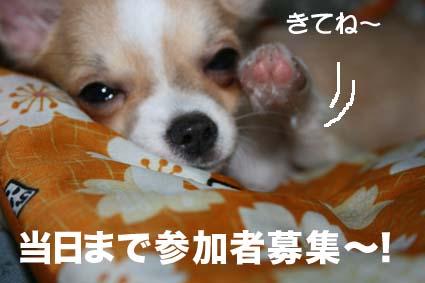 3_20120714012318.jpg