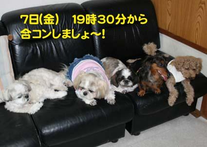 3_20120904155144.jpg