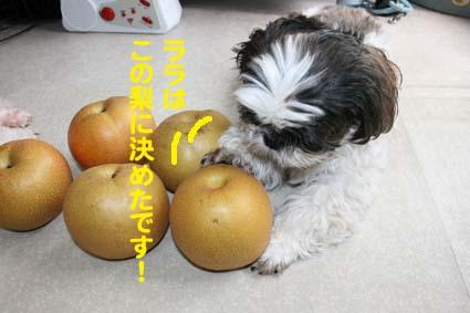 3_20121003175158.jpg