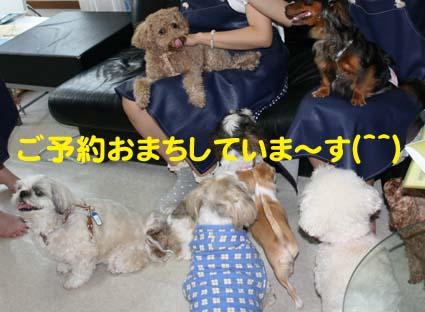 3_20121005081815.jpg