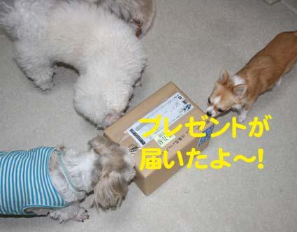 3_20121012175120.jpg