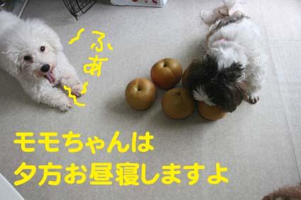 3_20121012180615.jpg