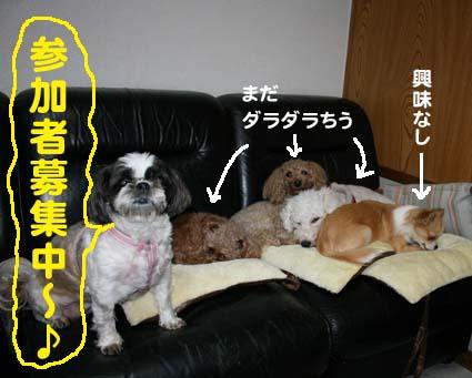 3_20121121122222.jpg